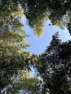 木のクローズアップの写真・画像素材[4185066]