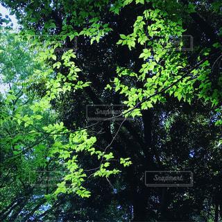 五月の新緑の写真・画像素材[2159702]