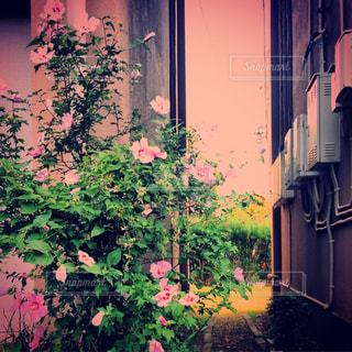 団地脇のかわいい花の写真・画像素材[2182401]