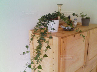 家具・植物・インテリアの写真・画像素材[2843504]