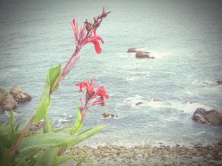 浜辺の赤い花の写真・画像素材[2847652]