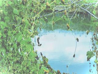 水面と植物の写真・画像素材[2848830]