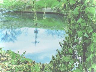 水面と植物の写真・画像素材[2848867]