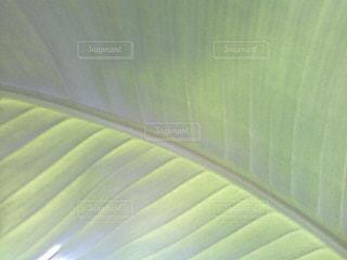 大きな葉のクローズアップの写真・画像素材[2858223]
