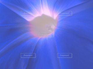 朝顔の花・クローズアップの写真・画像素材[2858224]