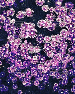 密集する花の写真・画像素材[2861015]