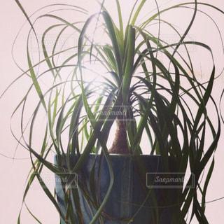 植物のクローズアップ・光・シルエットの写真・画像素材[3000288]