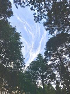 森の中から見た青空の写真・画像素材[3125313]