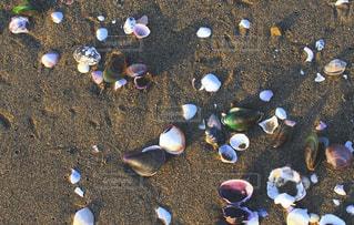 砂浜の貝殻の写真・画像素材[3157289]
