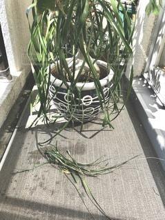ベランダの植物のクローズアップの写真・画像素材[3373661]