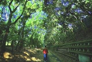 緑道の木陰を歩く人・林のトンネルの風景の写真・画像素材[3484897]