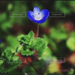小さな花のクローズアップの写真・画像素材[3485426]