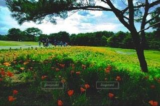 花の咲く広場の写真・画像素材[3487216]
