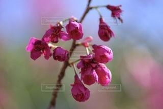 花のクローズアップの写真・画像素材[3516610]
