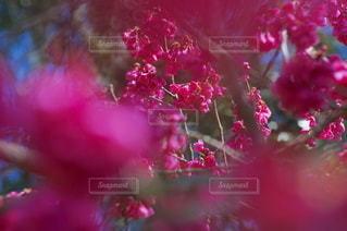 ピンクの花の視界の写真・画像素材[3566064]