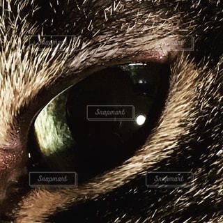 beautiful eyesの写真・画像素材[2009300]