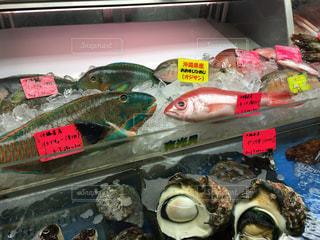 お魚の写真・画像素材[2010968]