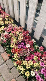 花の写真・画像素材[2043754]
