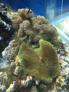 魚の写真・画像素材[235704]