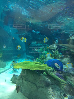 熱帯魚の写真・画像素材[235705]