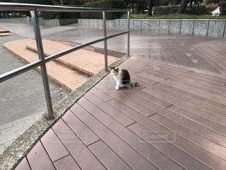 猫の写真・画像素材[2015360]