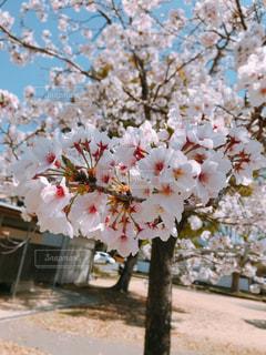 花の写真・画像素材[2010849]