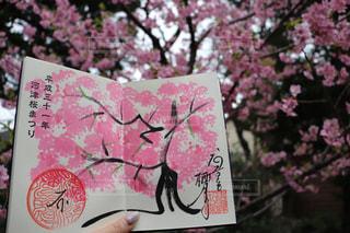 春の写真・画像素材[2011366]