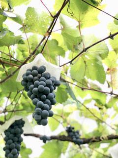 秋の写真・画像素材[2011451]