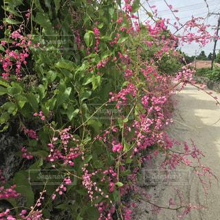 竹富島の風景の写真・画像素材[2011738]