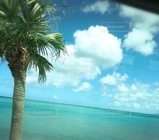 南の島、車窓、ひとり旅の写真・画像素材[2013243]