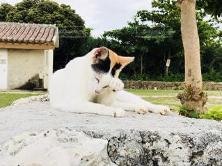 竹富島の猫の写真・画像素材[2013843]