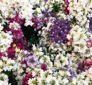 カラフルの花々の写真・画像素材[2020735]