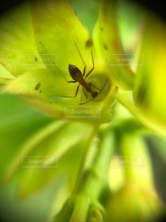 蟻さんのスイーツの写真・画像素材[2037973]