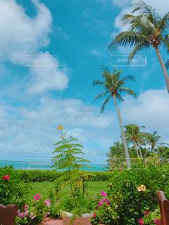 南の島のガーデンの写真・画像素材[2042055]