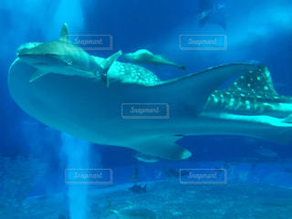 美ら海水族館の写真・画像素材[2016559]