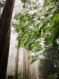 霧の中の静寂の写真・画像素材[2046656]