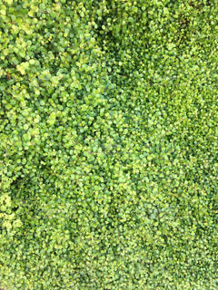 グリーン色がナチュラルにの写真・画像素材[2103240]