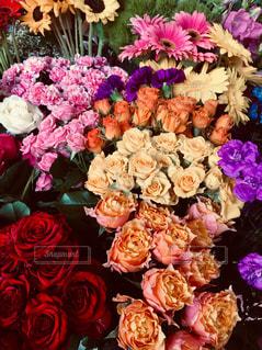 母の日は薔薇の種類が多色です。の写真・画像素材[2113200]
