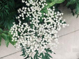 白壁に星のようにキラキラ見える小花達がかわいいです。の写真・画像素材[2113278]