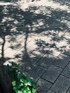 木陰が主役の写真・画像素材[2143949]