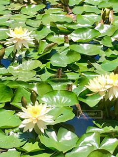 花のクローズアップの写真。の写真・画像素材[2223632]