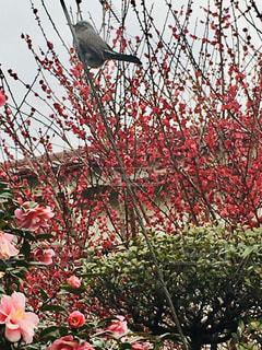 春の訪れの写真・画像素材[2967094]