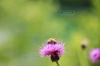 花のクローズアップの写真・画像素材[2271994]