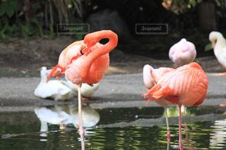 動物の写真・画像素材[2011989]