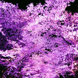 花の写真・画像素材[2013272]