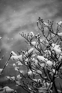 雪の写真・画像素材[2013232]