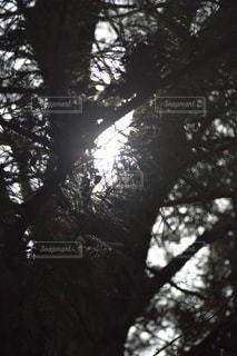 光と陰の写真・画像素材[2013289]