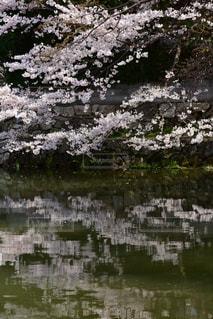 自然の写真・画像素材[2013590]