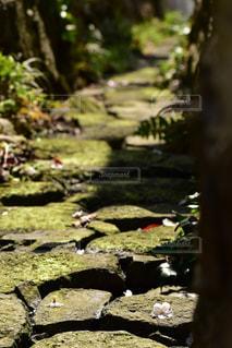 自然の写真・画像素材[2013593]