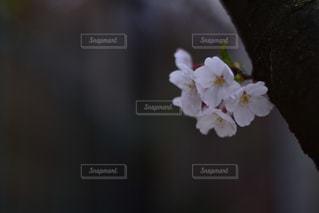 花の写真・画像素材[2013759]